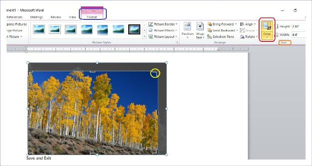 Picture Tools/Format>Crop | Word Paste Text Only and Insert Pictures