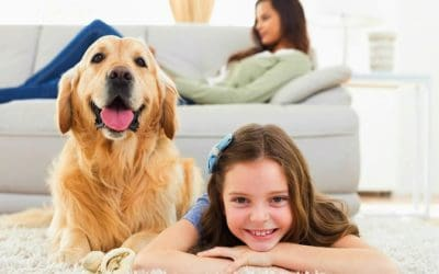 What To Look For In A Dog Camera | Products Perfect For Pet Owners