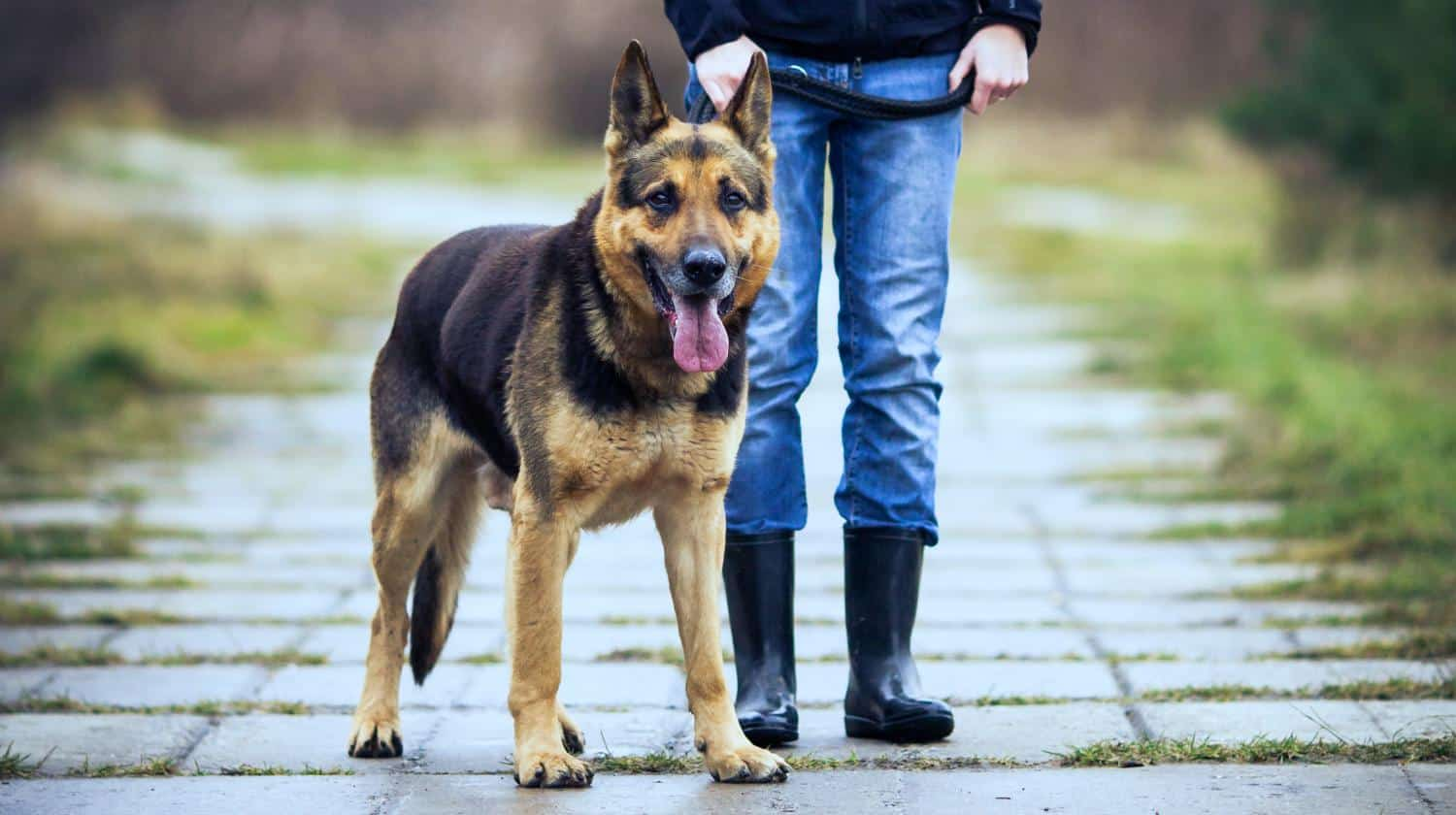 Feature | person and a dog | An Overview of Family Watchdog