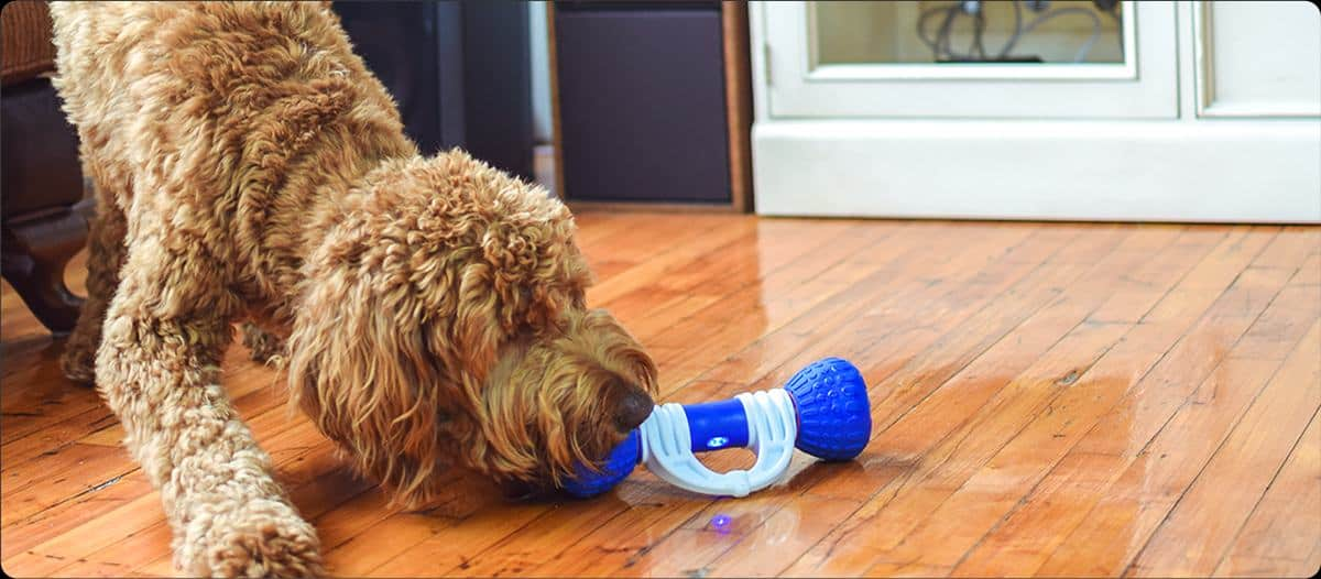GoBone Interactive App-Enabled Toy | Must-Have Pet Tech For Your Cats and Dogs