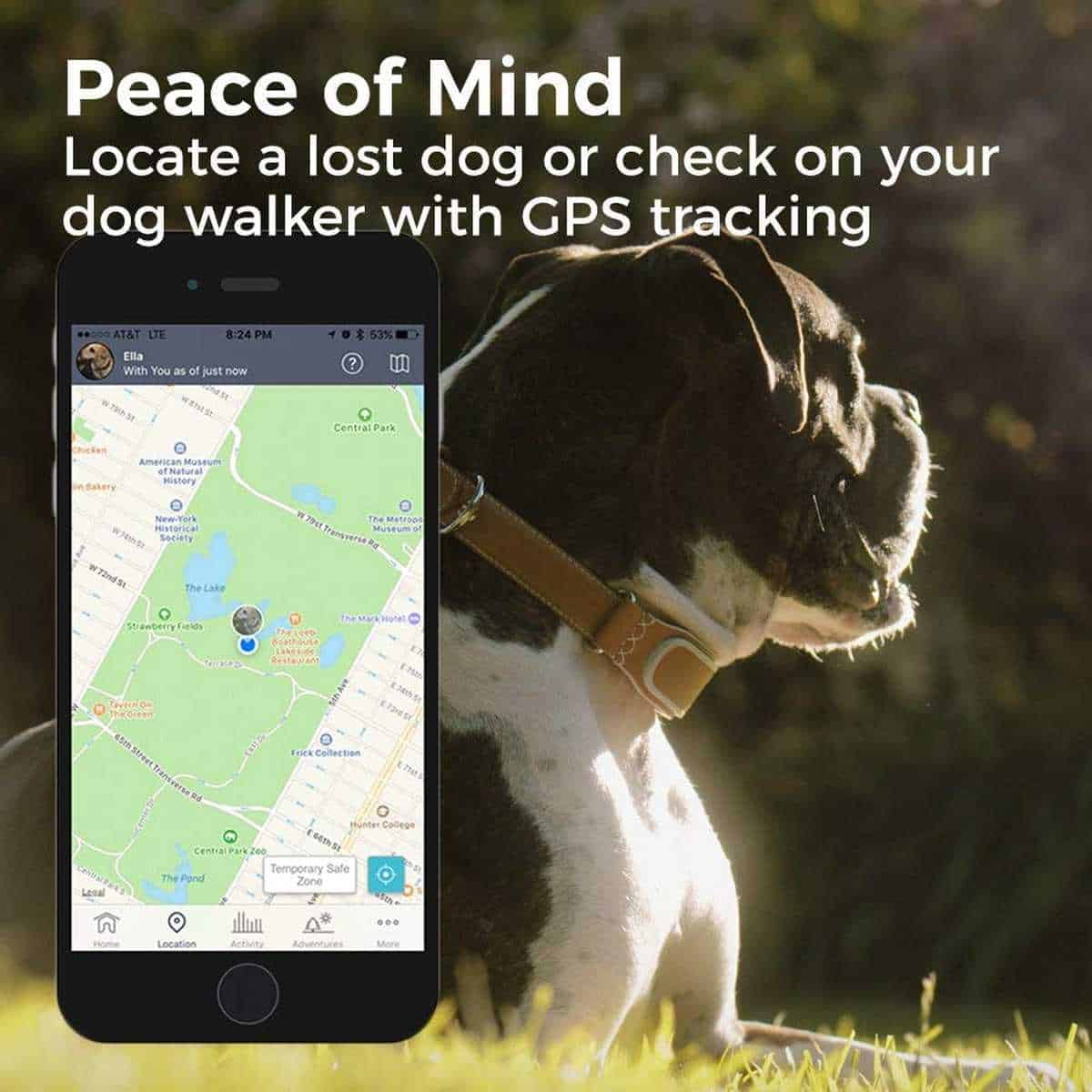 LINK AKC Smart Dog Collar | Must-Have Pet Tech For Your Cats and Dogs