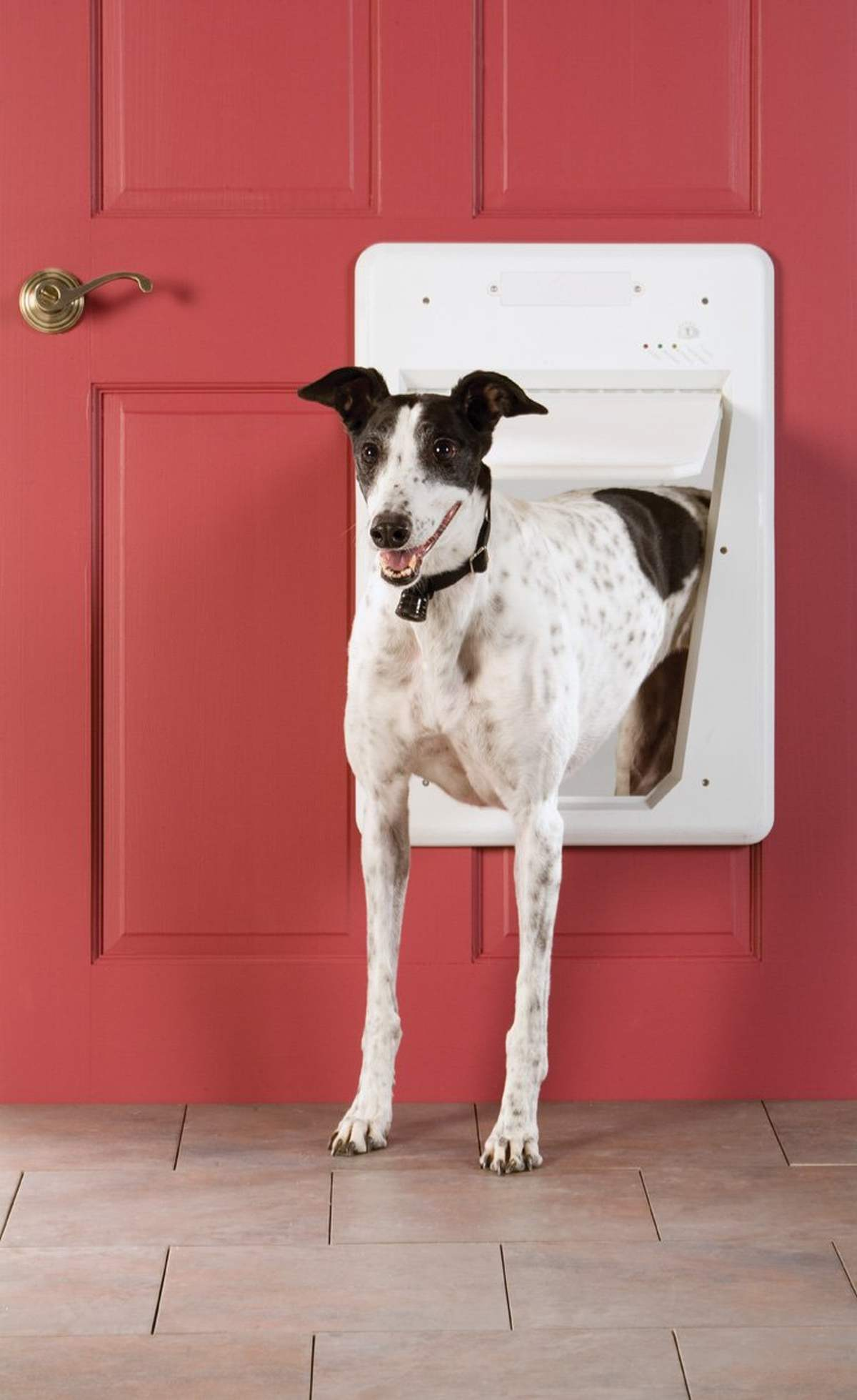 PetSafe Electronic SmartDoor | Must-Have Pet Tech For Your Cats and Dogs
