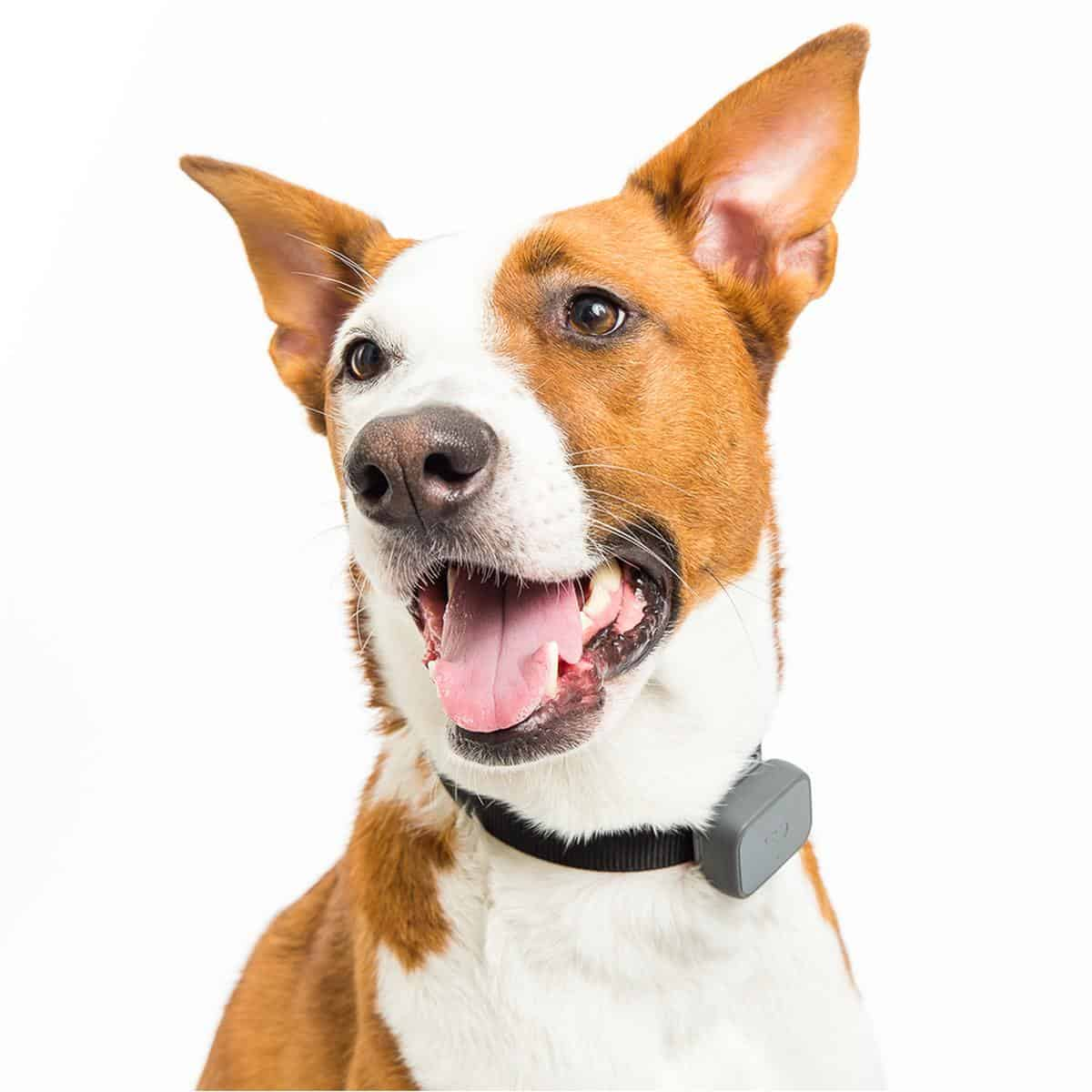 Whistle 3 GPS Pet Tracker & Activity Monitor | Must-Have Pet Tech For Your Cats and Dogs