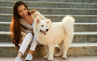Feature | Asian woman playing with her pet | Must-Have Pet Tech For Your Cats and Dogs