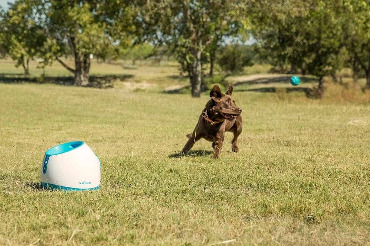 iFetch Automatic Ball Thrower for Dogs | Must-Have Pet Tech For Your Cats and Dogs