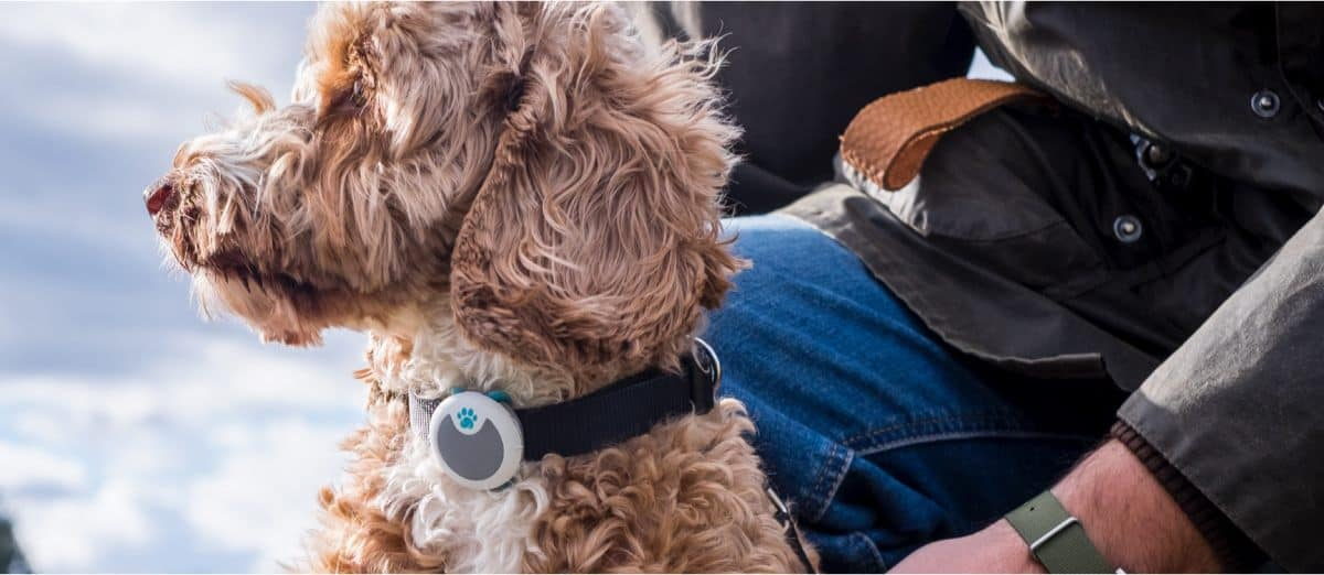 Sure Petcare System | Tech-Forward Pet Accessories To Share With Your Furry Friend