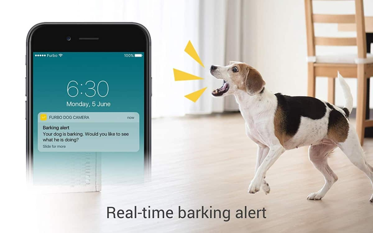 Real-Time Barking Alerts and Notifications | Is The Furbo Dog Camera As Smart As They Say It Is?