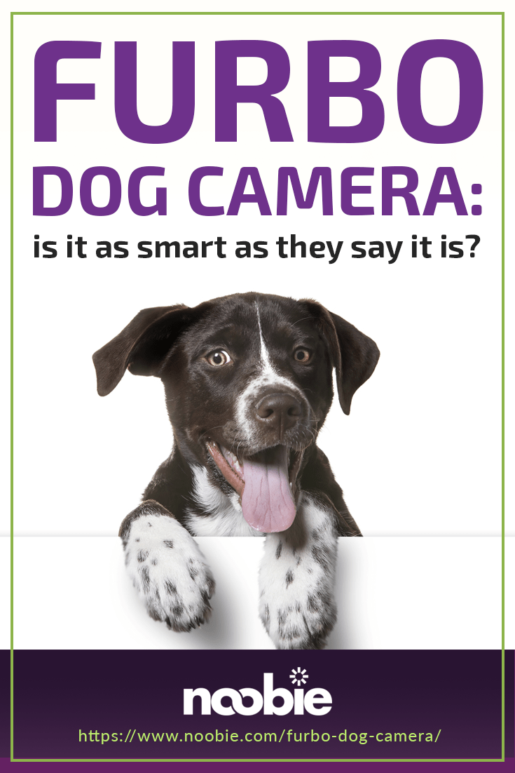 Is The Furbo Dog Camera As Smart As They Say It Is? | https://www.noobie.com/furbo-dog-camera/