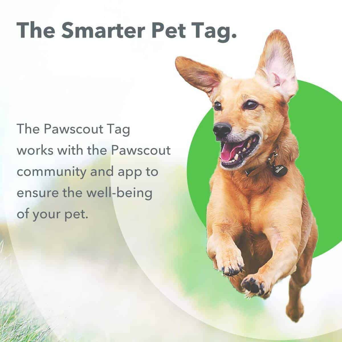Pawscout Dog & Cat Community Pet Tracker | Best Pet Trackers Available On Amazon