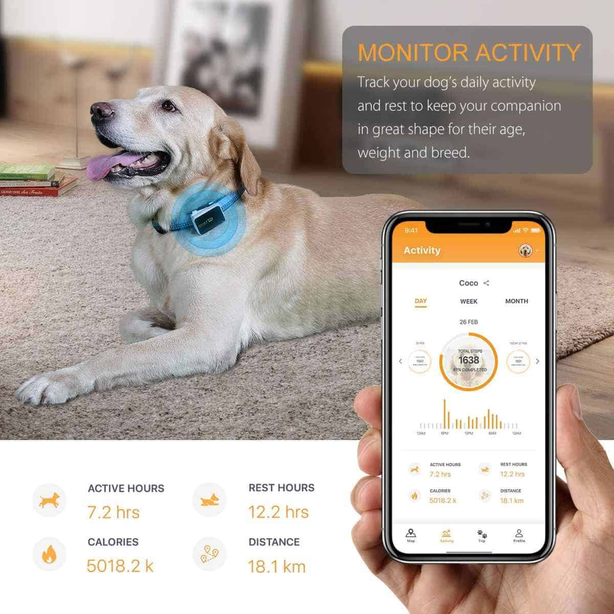 Pawfit Pet GPS Tracker and Activity Monitor | Best Pet Trackers Available On Amazon