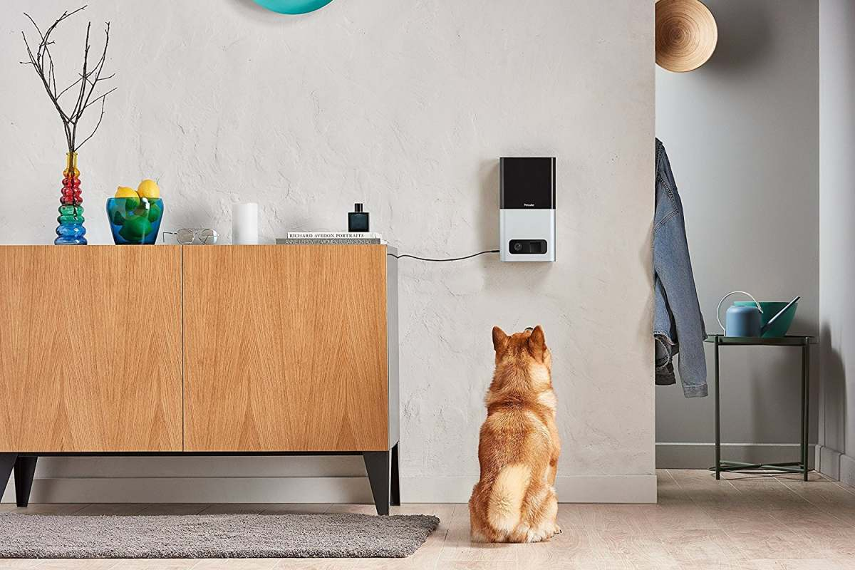 Petcube 2 | Tech-Forward Pet Accessories To Share With Your Furry Friend