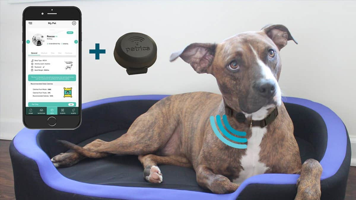 Petrics Smart Bed | Tech-Forward Pet Accessories To Share With Your Furry Friend