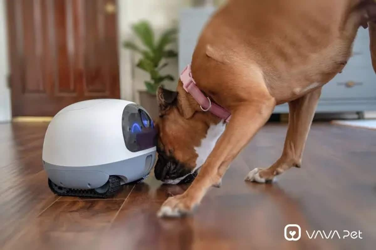 Vava Mobile Petcam | Tech-Forward Pet Accessories To Share With Your Furry Friend