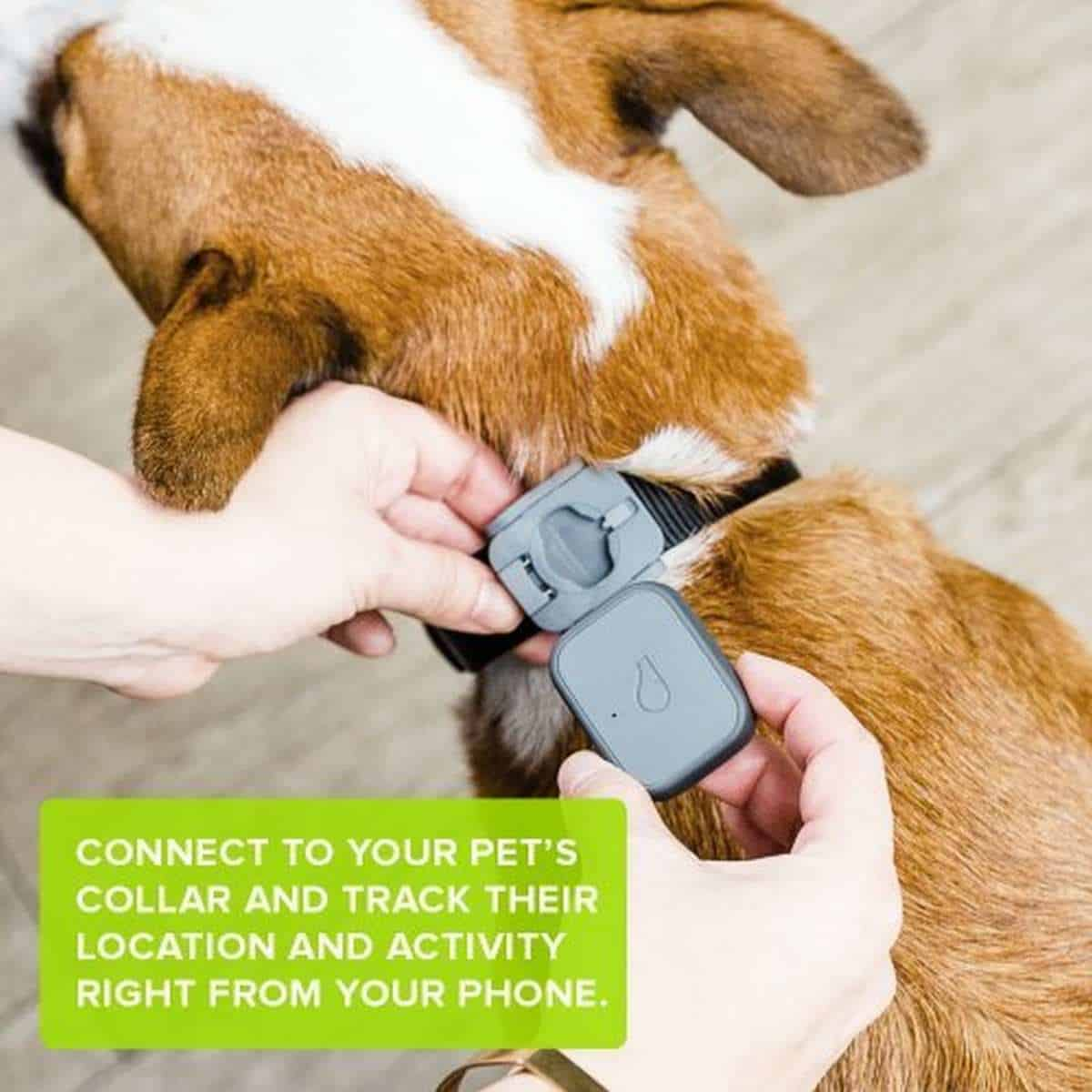 Whistle 3 GPS Dog Tracker | Best Pet Trackers Available On Amazon