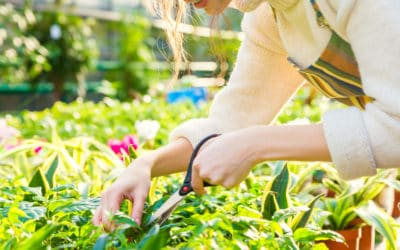 Feature | Cute young woman gardener cutting plants with garden scissors | Best Garden Tools And Gadgets Every Gardener Must Have