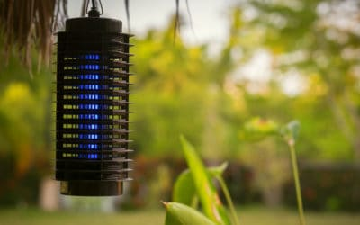 Featured | Blue insect lamp | Bug Zapper: How Does It Work And Which One Should You Get?