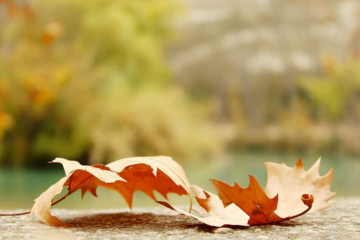 Autumn leaf fall | Take Good Photos This Fall Season With These Photography Basics | basics of photography