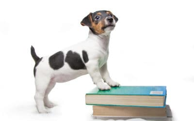 Puppy on books