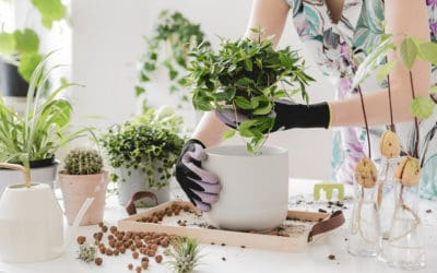 Indoor Gardening: 10 Must-Have High-Tech Tools